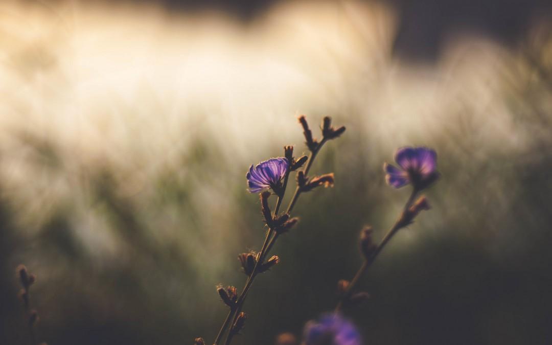 Een klein, teder bloemetje in een staaltje zon