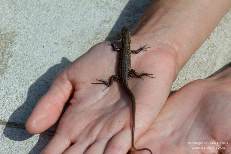 Salamander op de hand van Inge