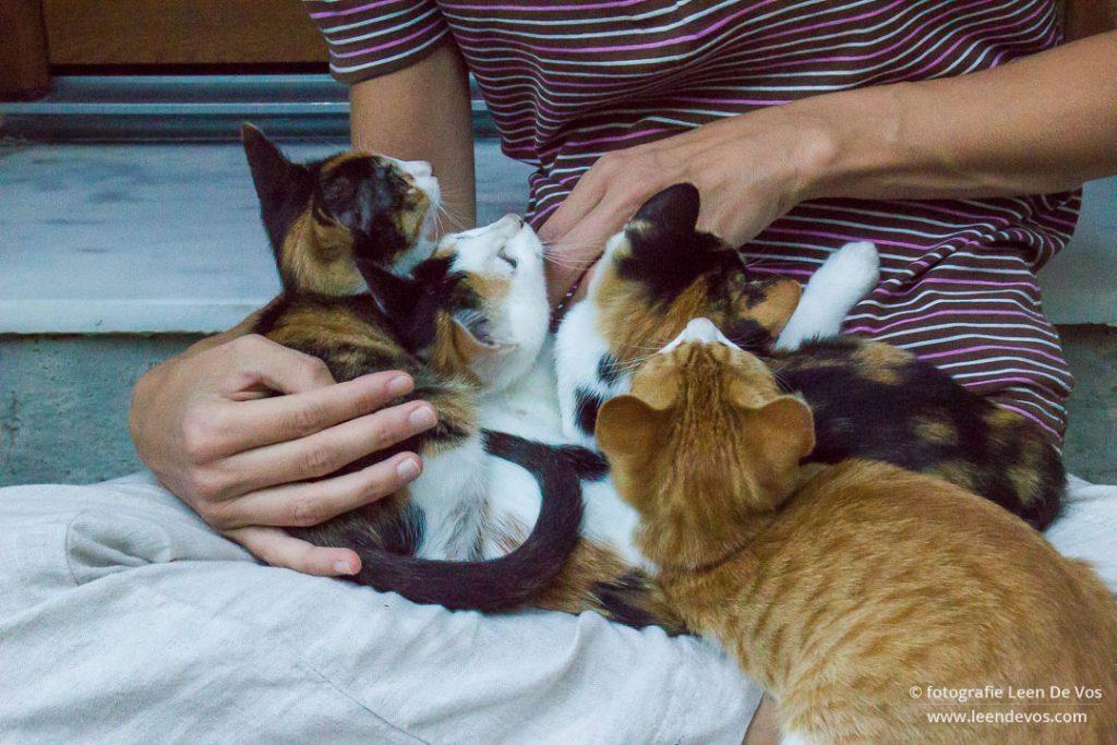 kleine katjes komen afscheid nemen van Inge