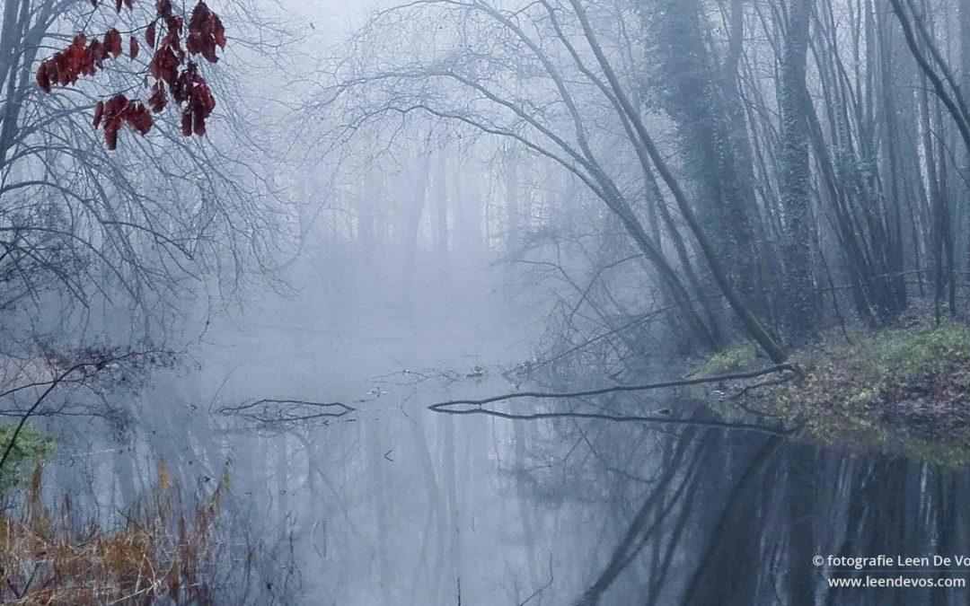 Bomen in de mist weerspiegelen in het water